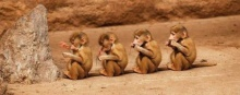 รูปถ่ายสวยๆ ของสารพัดสัตว์โลก