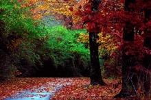 Autumn Scenery ภาพฤดูใบไม้ร่วงสวยๆ