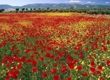 ทุ่งดอกไม้หลากสี