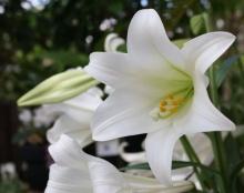 ++ Flower ++