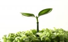 ชีวิตใหม่ ในโลกสีเขียว 2