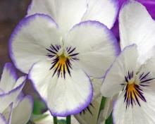 ดอกไม้เพื่อคุณ..........