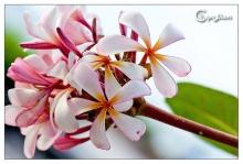 ดอกไม้หลากสีสันนน ..
