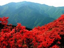 ภูเขาสีแดง....ด้วยดอก Azalea