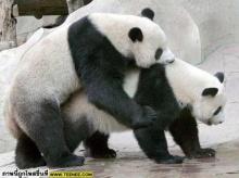 เอาใจคนรักแพนด้า : Couple Panda