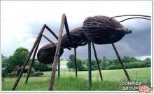 ๏~* แมลงไม้ *~๏ (2)