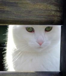.. เรื่องแมว ๆ .. (o^.^o) 2