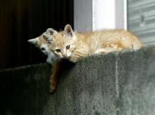 น้องแมวบ้านนา .:。*゚'゚・. <( ̄︶ ̄)/