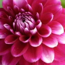 ดอกไม้หลากหลาย  `•.¸ ¸.•´ (o^.^o)