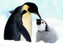 ••penguin••°•.°(o^.^o) 2