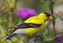 นกสีสวยๆ จากหลากมุมโลก