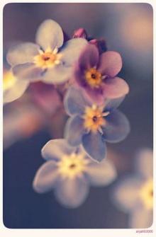 มาดูดอกไม้กระจิ๊ดริ๊ดกัน!!