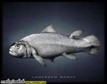 From FISH tooo...oooo HUMAN!