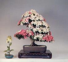 ต้นไม้สวยๆดอกเต็มต้น ( 2 )