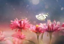 รูปภาพ โลกของแมลง โลกใบเล็กที่แสนสวยงาม น่ามหัศจรรย์