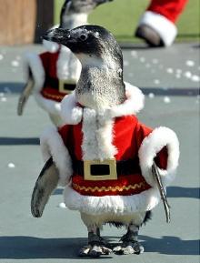 ขบวนนกเพนกวิน ที่น่ารัก