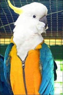 นกแก้วหลากสายพันธุ์