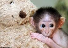ฮาๆกับลูกลิงน่ารัก