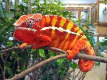 สัตว์ที่มีสีสันสดใส