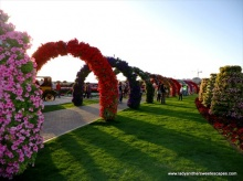 Miracle Garden สวนดอกไม้ใหญ่ที่สุดในโลก
