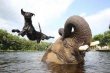ช้าง-มะหมา เพื่อนซี้ต่างสายพันธุ์