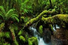 ป่ามหัศจรรย์ ทางธรรมชาติ