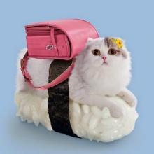 ซูชิ รวมร่างกับ แมว สุดน่ารัก