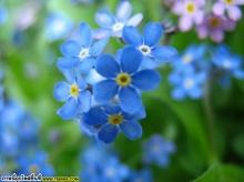 ดอกไม้สวยๆ จ้า
