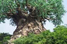มีจริงป่ะเนี่ย!!!..ต้นไม้ประหลาด