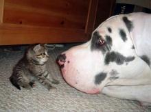 ..CAT&DOG ..น่ารักมากกก..