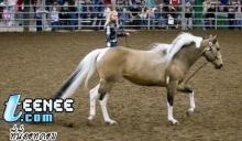 ม้าหาง ย๊าว ยาว