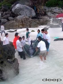 ภาพน่าประทับใจ ระดมพลทั้งเกาะ...ช่วยชีวิต...