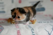 ~ แมวอะไรว้า..น่ารักชะมัด~