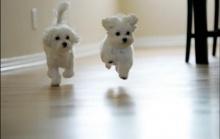 น้องหมาขาวจั๊วะ!?1