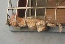 ง่วงไหน นอนนั่น แมวไม่เรื่องมาก
