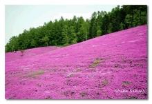 ภูเขาสีชมพู