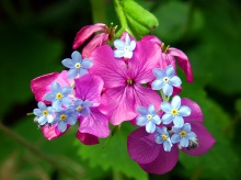 ยามเช้าด้วยดอกไม้สวย ๆ