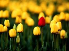 ดอกไม้สวย .. 2