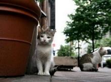 แมว+หมา คัยน่ารักกว่ากัน