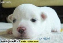 ขันตอนการกินหมา ~อย่างโหด !!!!