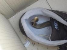 ใครที่ชอบถอดรองเท้าหน้าบ้านโปลดระวัง (หัวใจตูจะวาย)