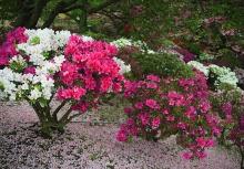 ดอกไม้สวย ในสวนร่มรื่น
