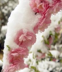 ..ดอกไม้กลางหิมะ..\(^.^)/