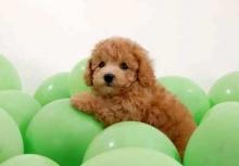--[แด่คนรักหมา-2]--