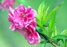 .. ดอกไม้อีกแล้วค่ะ .. (^з^)-☆