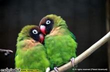 สัตว์โลก น่ารัก จริงๆ