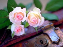 * ~- Roses for you - ~*