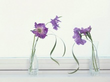 Lⓞⓥⓔⓛⓨ Floral Design•:*´¨`*:•.(o^.^o) 2