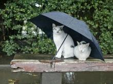 น้องเหมียวที่กลัวฝน.. <( ̄︶ ̄)/