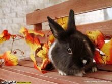 Rabbit♥